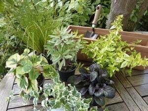 jardiniere-automne-plantes