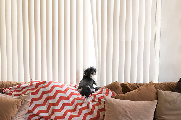 Stores californiens en PVC avec un petit chien qui regarde la caméra